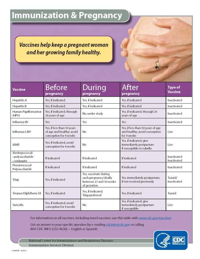 pregnancy chart
